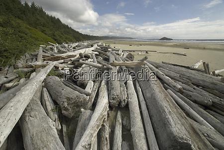 driftwood at long beach tofino british