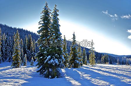 winter frost winter in british columbia