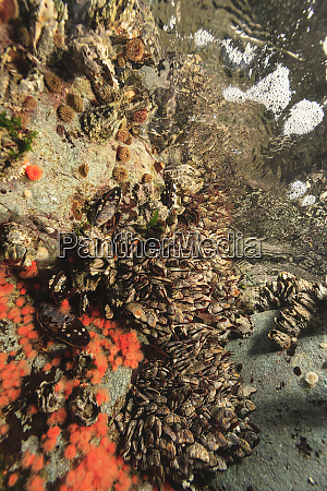 shallow invertebrate marine life browning passage
