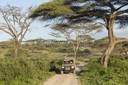 landscape of acacia trees green shrubs