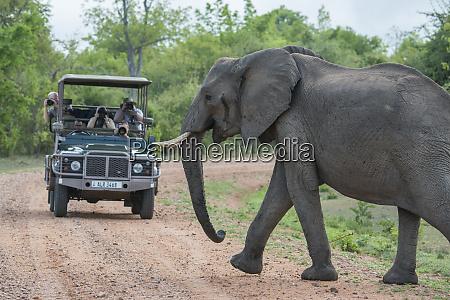 africa zambia south luangwa national park