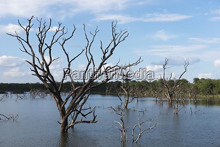 flooded woodland aerial view zimbabwe