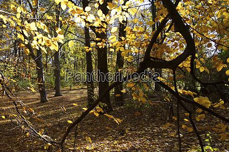 germany berlin inside the tiergarten which