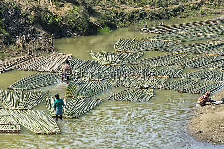 transporting bamboo timber on the river