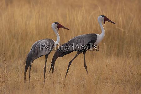 shinde camp okavango delta botswana africa
