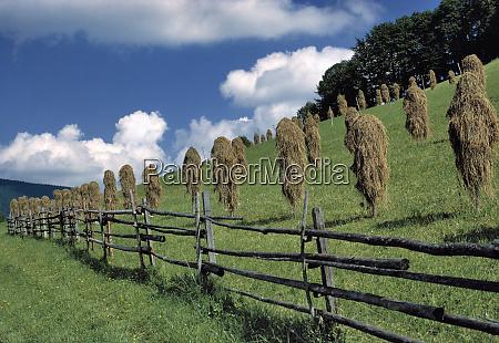 germany bavaria ramsau hay dries along