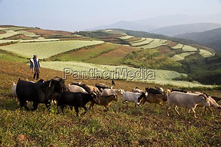 elder goat farmer in the red