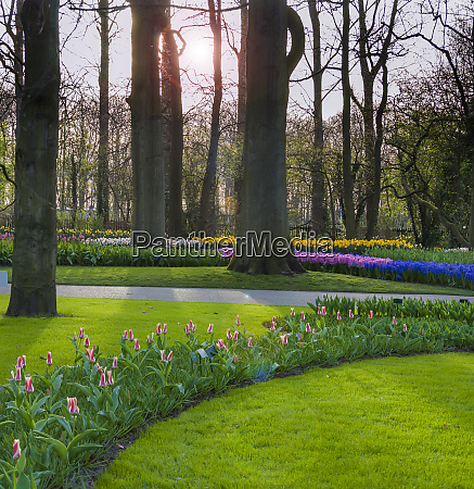 sunlit formal woodland garden in spring