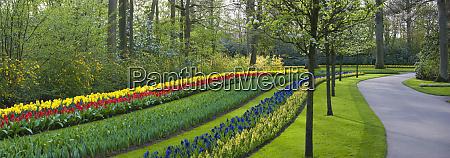 flowerbeds along path keukenhof gardens lisse