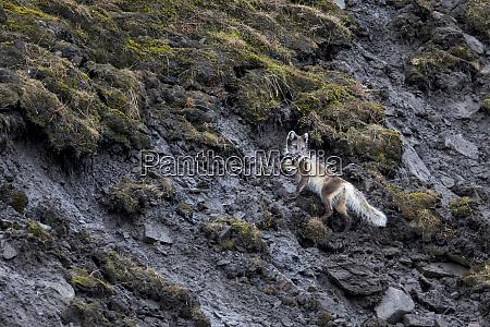 arctic norway svalbard spitsbergen longyearbyen arctic