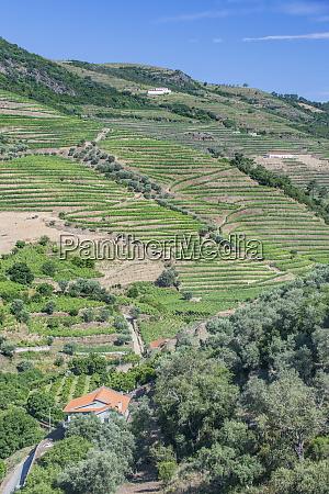 portugal douro valley hillside vineyards large