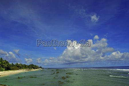 sea rocks palm trees and beach