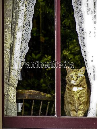 alexandria virginia orange tabby cat looks