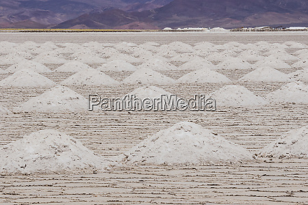 piles of salt have been harvested