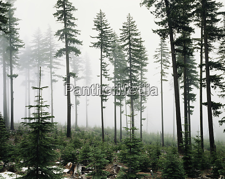 usa washington managed forest large format