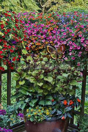 container gardening on deck with annual