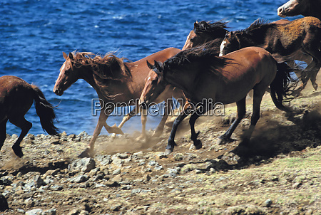 south america chile easter island horses