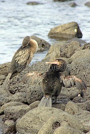 south america ecuador galapagos islands the