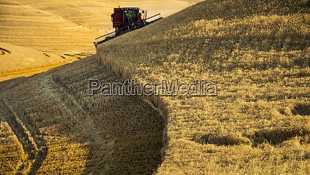 usa washington state palouse harvest time
