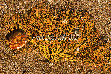 mexico baja california sea of cortez