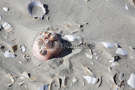 beach shells isla magdalena baja california