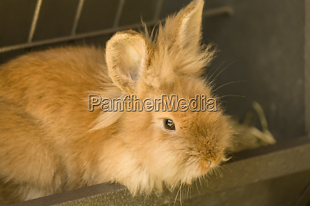 soft furry bunny sitting in a