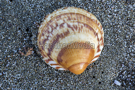 beach shell magdalena bay baja california