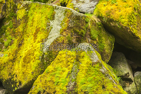 usa alaska tongass national forest moss