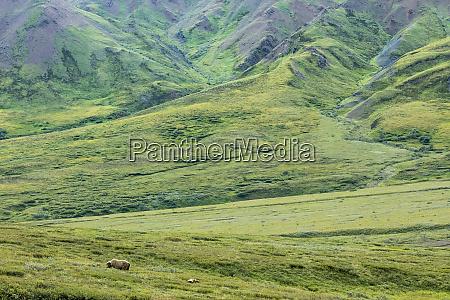 usa alaska denali national park landscape