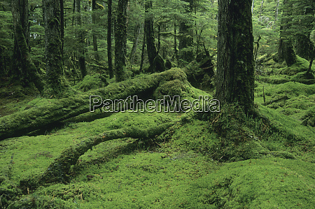 alaska tongass national forest w brothers
