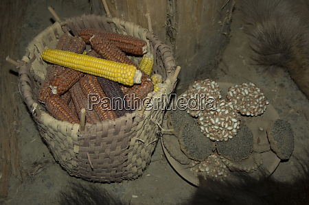 basic food for the mandan hidatsa