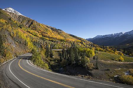 autumn aspen trees and million dollar