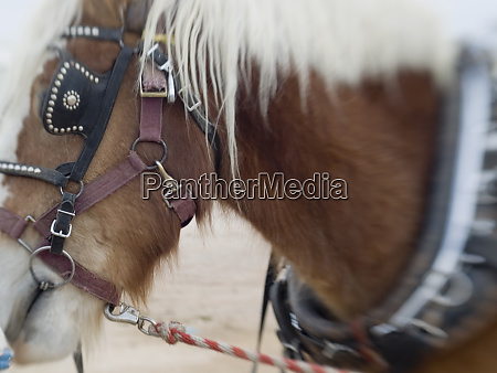 tucson arizona details of draft horses