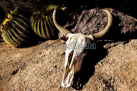 cowl skull out in the desert