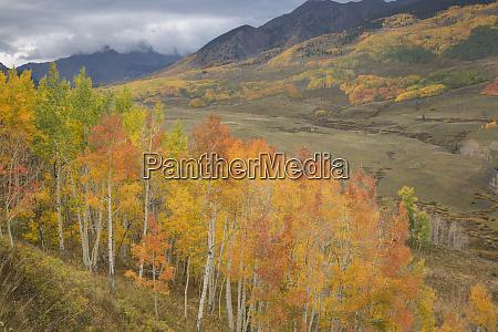 usa colorado gunnison national forest aspen