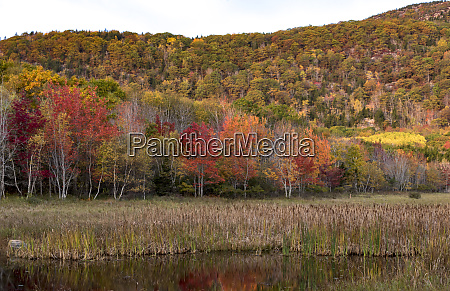 usa maine autumn foliage reflected in