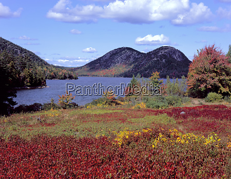 acadia national park maine usa vegetation