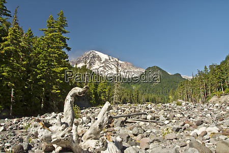 mount rainier driftwood nisqually river area