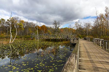 wooden boardwalk over beaver pond in