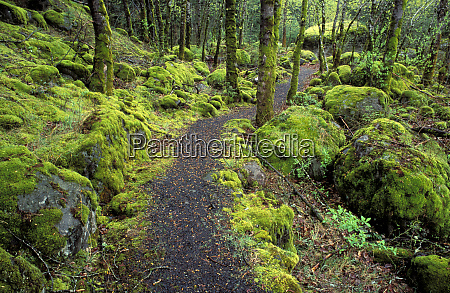 trail through moss covered forest along