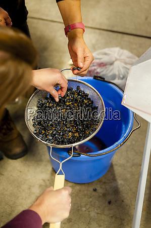 usa washington state richland testing grapes