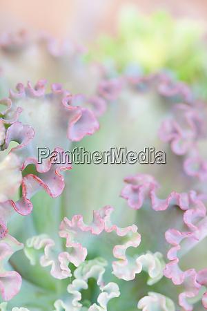 usa california san diego colorful abstract