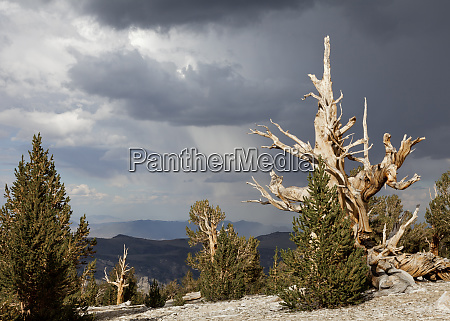 usa california inyo national forest scenic