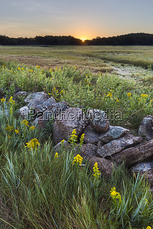 sunrise over the salt marsh along