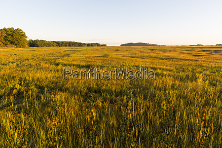 essex river salt marsh at the