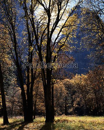 usa california yosemite national park backlit