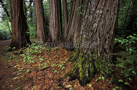 north america usa california yosemite national