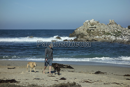 man and dogs walking on sand
