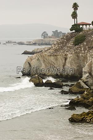 usa ca pismo beach foggy pelican