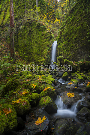 usa oregon mysterious mossy grotto falls